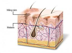 Quá trình hình thành các vết sạm nám trên bề mặt da